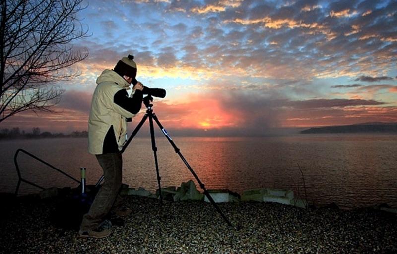 От 11 януари стартира преброяване на зимуващите водолюбиви птици у нас