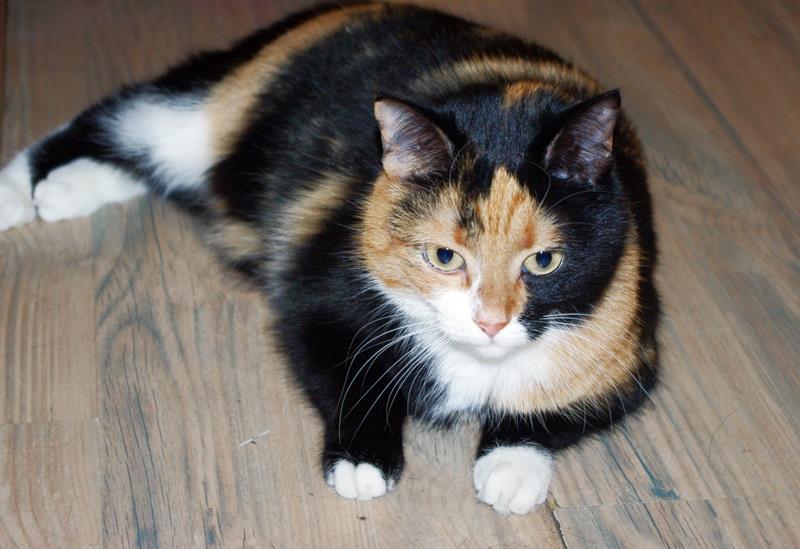1 март – Световен ден на котката