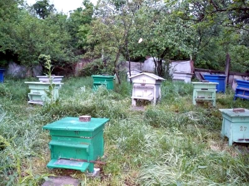 Крадат 24 пчелни семейства