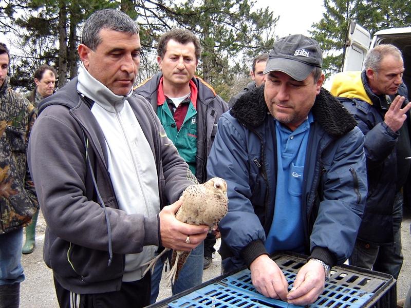 500 фазана и 50 яребици разселиха ловците на територията на 13 дружинки