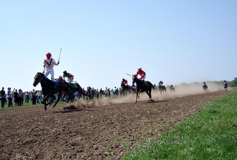 35 елитни коне от цялата страна се състезаваха на пистата край Горни Дъбник