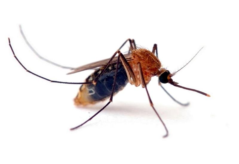 Отложиха за 16-ти и 17-ти ръсенете срещу комари