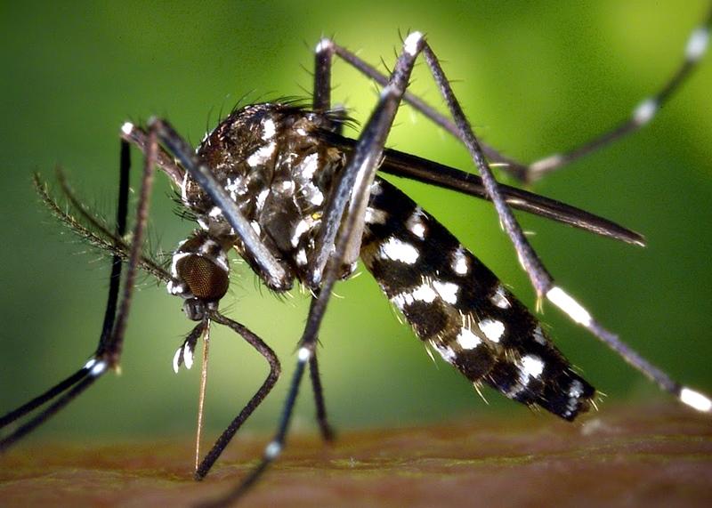 В края на юли ръсят срещу комари
