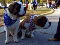 Съветниците отмениха Наредбата за регистрация и отглеждане на кучета на територията на община Плевен