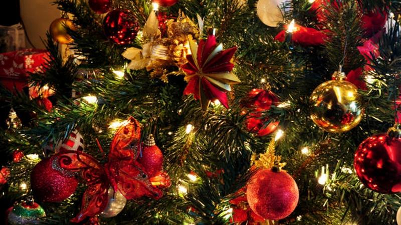 Елхата в Червен бряг ще грейне на 12 декември