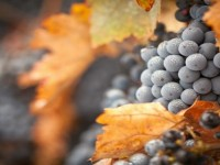 12 февруари е Денят на леденото вино