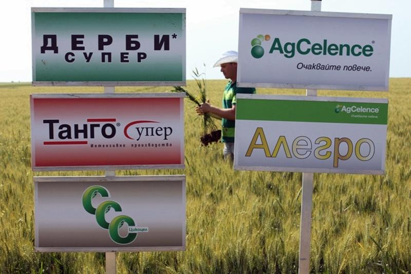 За третиране на пшеницата предупреждава Община Пордим пчелари и животновъди