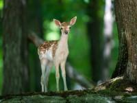 На 21 март се отбелязва Международният ден на гората