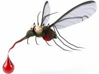 От днес започва третирането срещу комари в община Левски