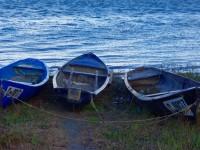С поредица инициативи крайдунавските общини отбелязват Деня на река Дунав – 29 юни