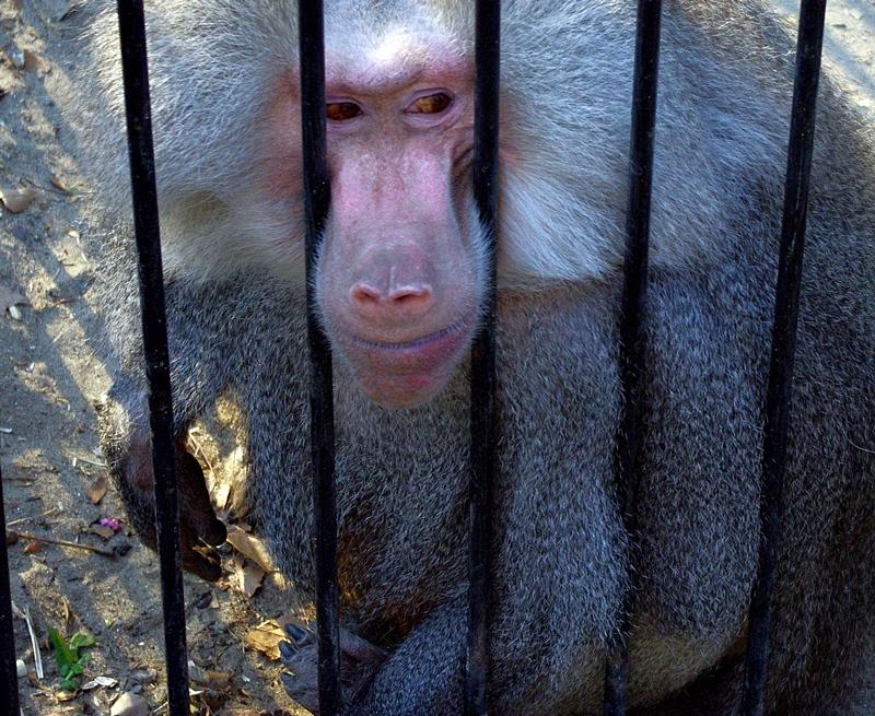Само пет зоопарка с лиценз, два от тях – в Плевенско