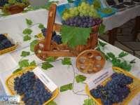 В ИЛВ – Плевен ще се проведе Открит ден на десертното и виненото грозде