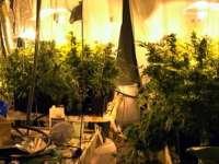 Плевенски полицаи разбиха наркооранжерия в Крушовица