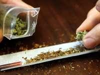 Мини ферма за марихуана и дози от дрогата открити при спецоперация в Койнаре