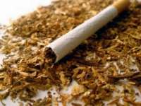 В Плевен потреблението на незаконни цигари е почти двойно от средното за страната