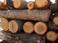 Арест за бракониери на дърва, спипани край село Бресте