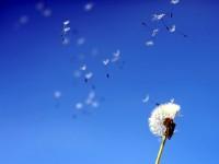 Жълт код за силен вятър е в сила за днес в Плевен