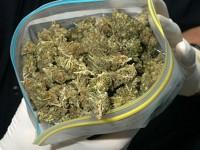 Над килограм марихуана открит при спецоперация в Плевен, арестуван е 34-годишен