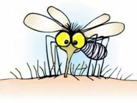 От днес в Плевен започва опушването срещу комари