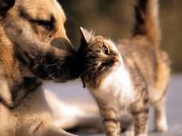 4 октомври – Световен ден за защита на животните