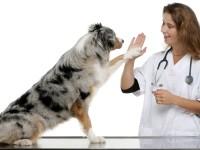 14 декември – Ден на ветеринаря