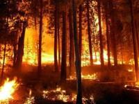 Обявиха до 31 октомври пожароопасен сезон в горските територии на община Пордим