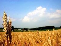 НАП – Плевен продава земеделска земя