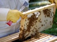 Огнеборци спасиха 100 пчелни кошера при пожар в Милковица