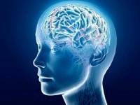 18 март – Световен ден на мозъка
