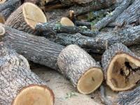 Арест за бракониери на дърва, засечени край Радомирци