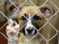 4 април – Световен ден на бездомните животни