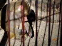 Зоокътът на Плевен получи лиценз