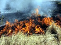 Пламъци изпепелиха 100 дка царевица в землището на Койнаре