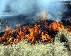 Отново пожари в сухи треви и отпадъци са бушували в Плевенско