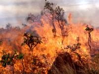 10 000 фиданки изгоряха при пожар в овощна градина в Пелишат
