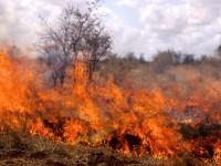 Пожар вилня в гробищния парк във Вълчитрън
