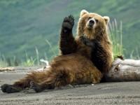 РИОСВ – Плевен взе участие в мониторинга на кафява мечка на територията на Западни Родопи