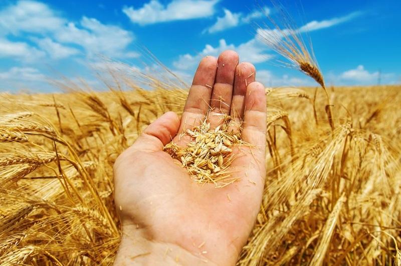 210 земеделци не са декларирали пред НАП – Плевен доход от получени субсидии