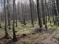 И Наредбата за управлението и ползването на горски територии влиза за дебат в Общински съвет – Плевен
