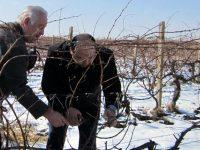 Владислав Николов: Грижата за лозето и направата на виното изисква посвещение и силно желание