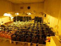 Оранжерия за канабис откри Полицията във фурна в Плевен (снимки)