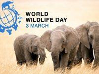 Световният ден на дивата природа се отбелязва на 3 март