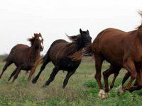 Празник на коневъдите организират в Никопол