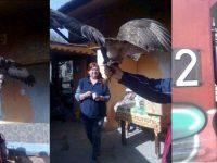 Семейство от Левски спаси птица от защитен вид, намерена в безпомощно състояние
