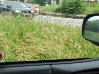 Кметът Спартански лично провери дейностите по косенето на треви в града