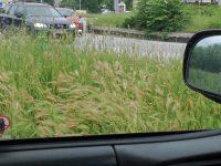 """Читател на """"Плевен за  Плевен"""": Избуялата трева пречи на видимостта на шофьорите в града"""