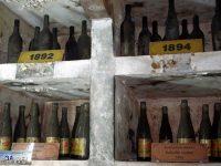Пред най-старата действаща изба у нас днес откриват гроздоберната кампания в Плевен