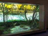 """С ново осветление посреща своите гости Експозиция """"Природа"""" на РИМ – Плевен"""
