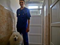 """Първокласен хотел за вашите домашни любимци предлага Ветеринарна клиника """"ИДА – ВЕТ"""" – Плевен"""