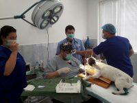 """Първата по рода си операция на булдог в Плевен извърши екип на Ветеринарна клиника """"ИДА – ВЕТ"""""""
